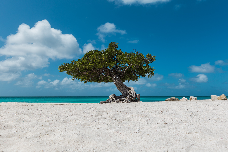 Aruba Eagle Beach (1)