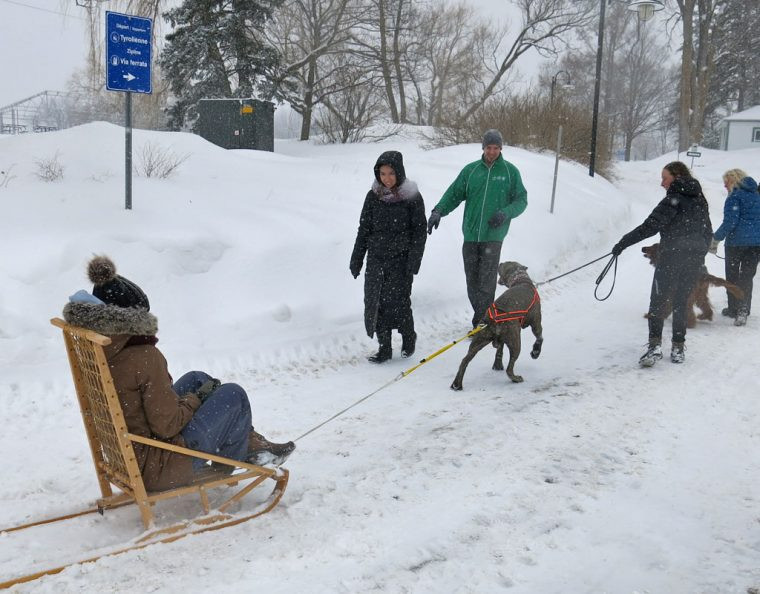 Dog_Sled_Montmorency_Falls