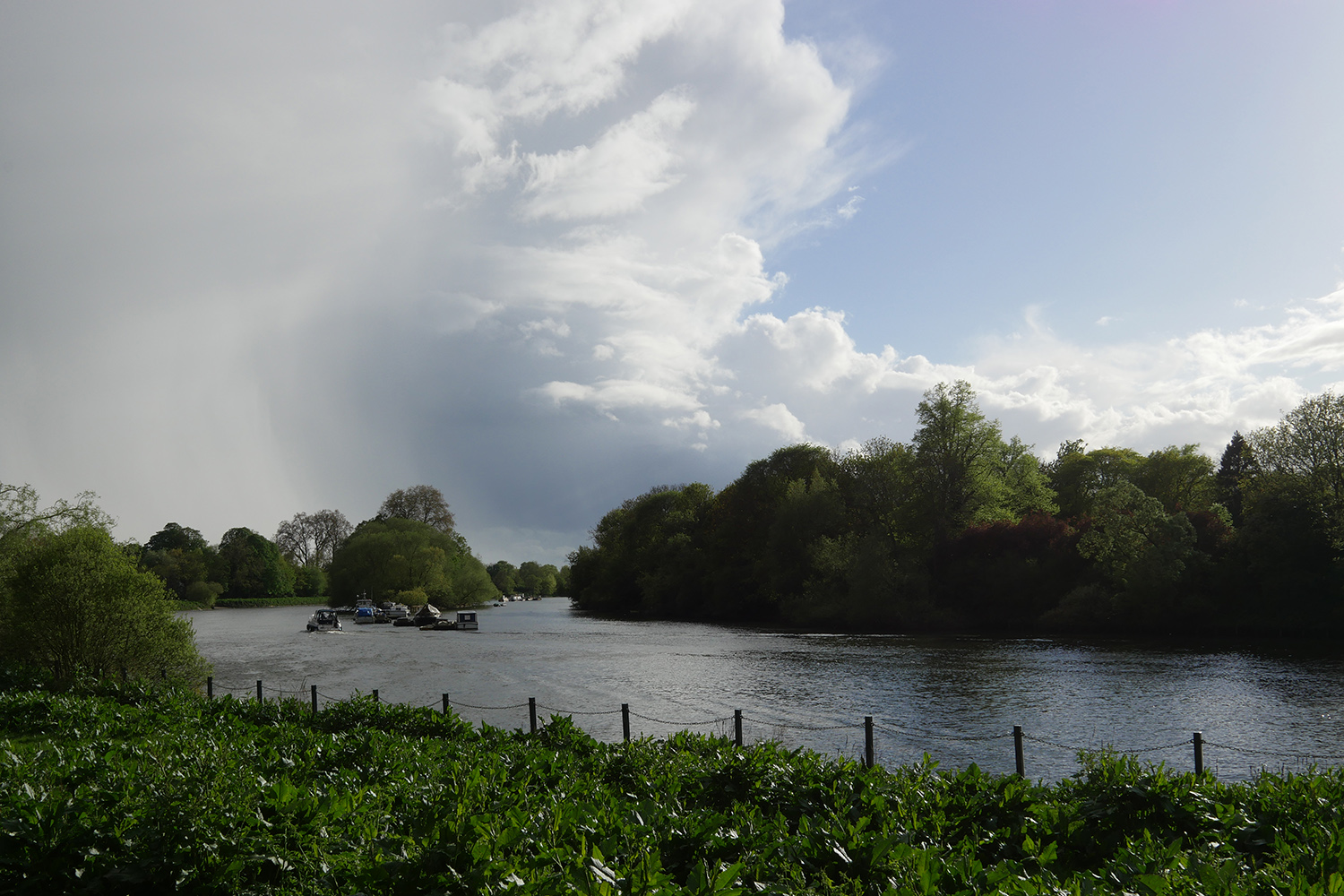 The Thames at Petersham Meadows