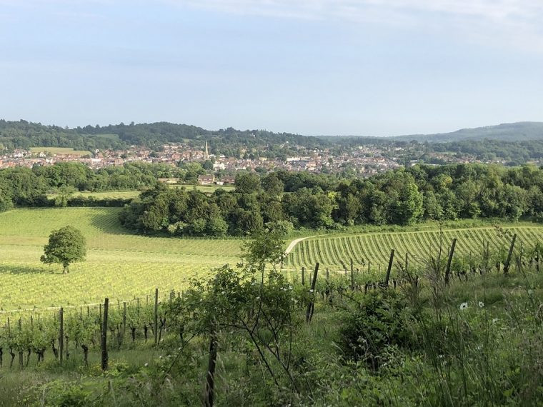 E-biking with Inghams - Dorking from Denbies Wine Estate Surrey