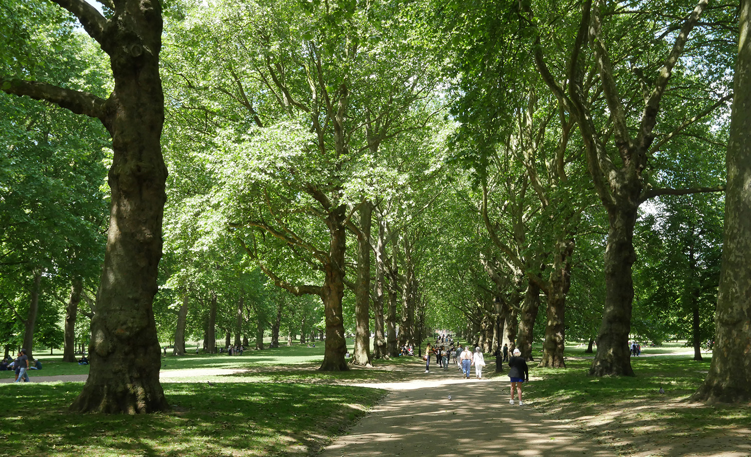 Green Park - Tree Lined Avenue