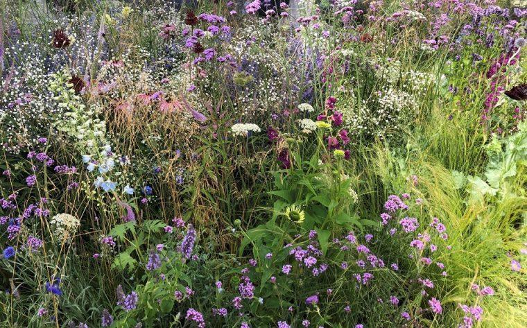 Apeiron: The Dibond Garden Hampton Court Flower Show