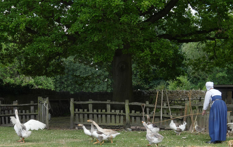 Mary Ardens Farm - Geese 2