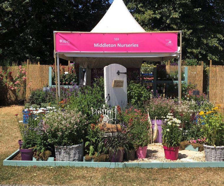 Middleton Nurseries Stand Hampton Court Flower Show