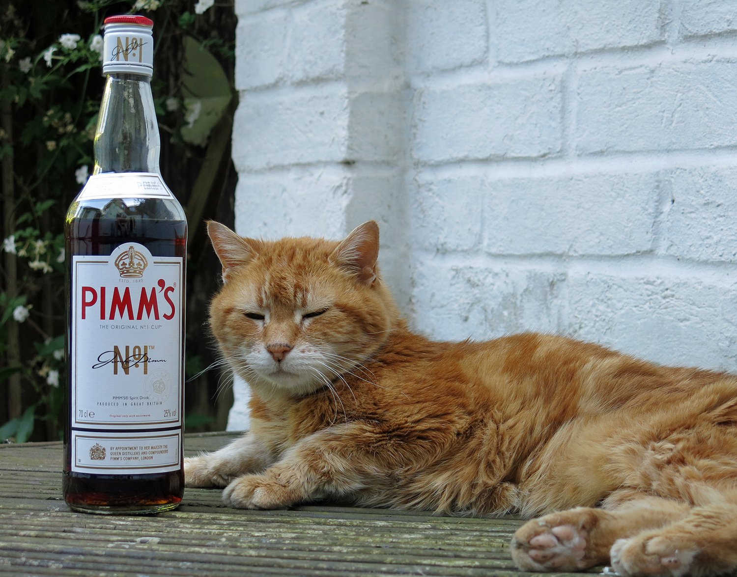 Pimms and the Cat