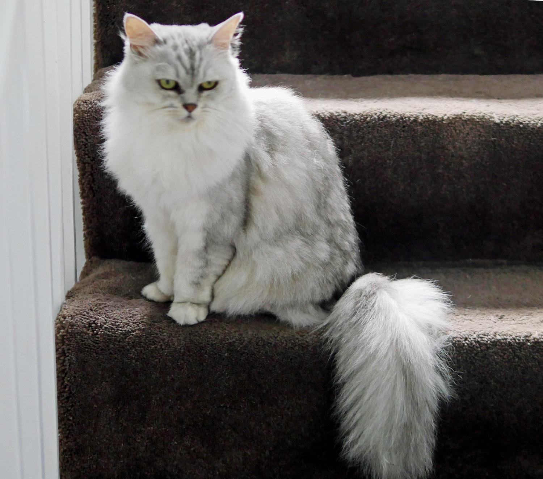 Lena Tiffanie Stair Cat