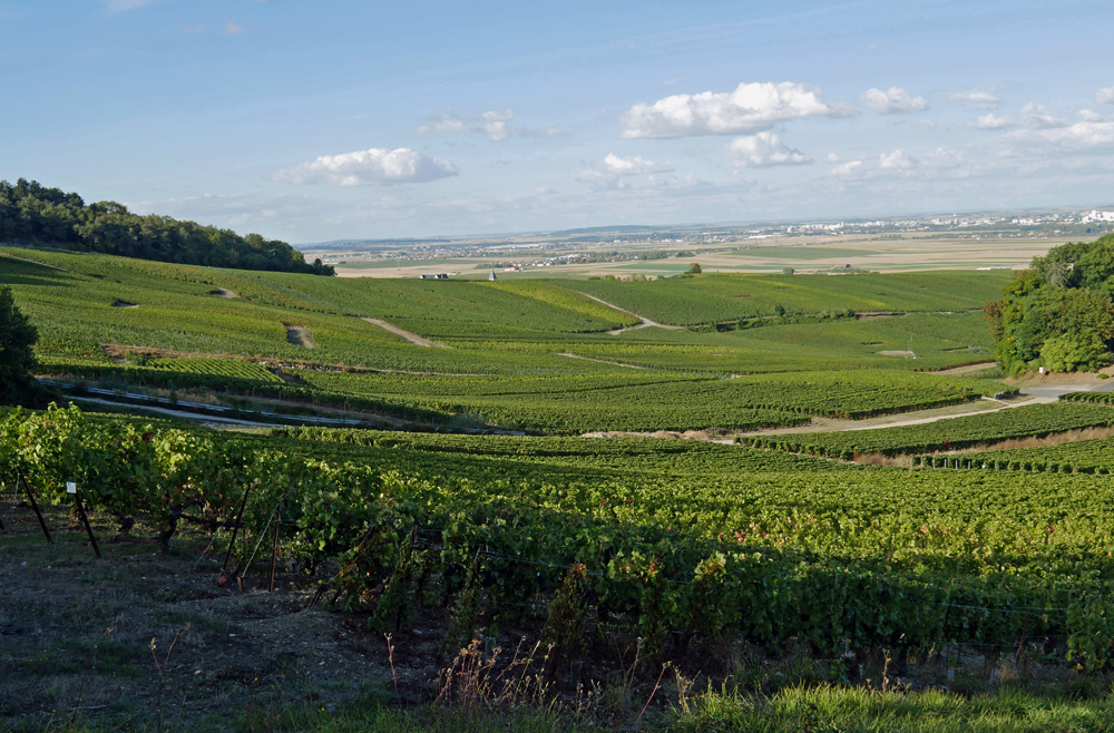 Champagne Vineyards - Montagne de Reims