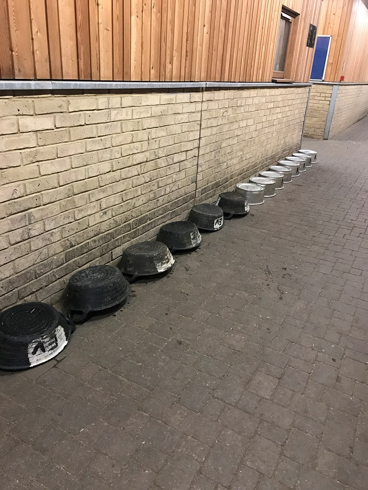 Kings Troop Horses Feeding Bowls
