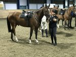 The Riding Club London – A ride with the King's Troop Horses