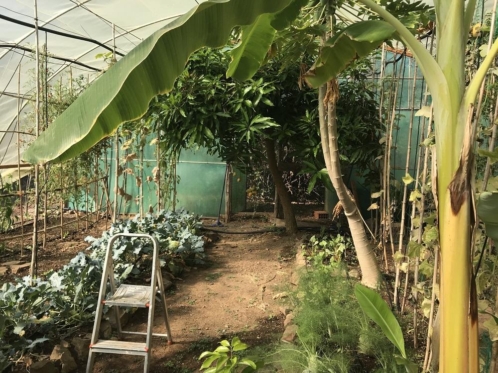 Moinhos Velhos - Greenhouse