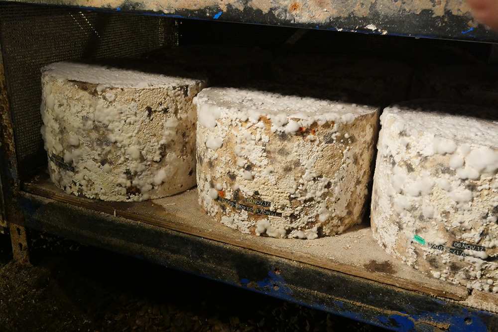 Cheddar Gorge Cheese Company - Aging Cheeses Cheddar Gorge