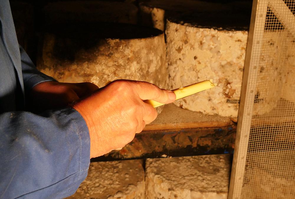 Cheese Sampling - Cheddar Gorge - artisan cheddar