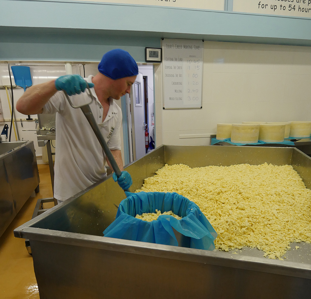 Filling the Cheese Moulds - Cheddar Gorge Cheddar