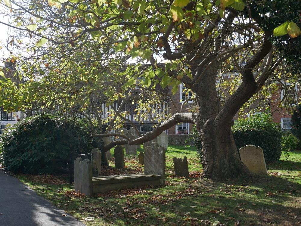 Gallivant - Rye churchyard