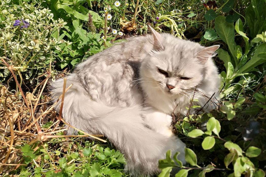Lena Tiffanie in the Garden
