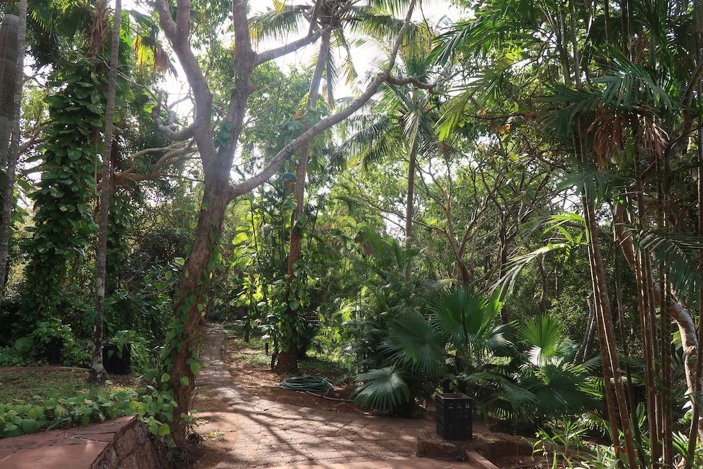 Nilaya Hermitage - forest path