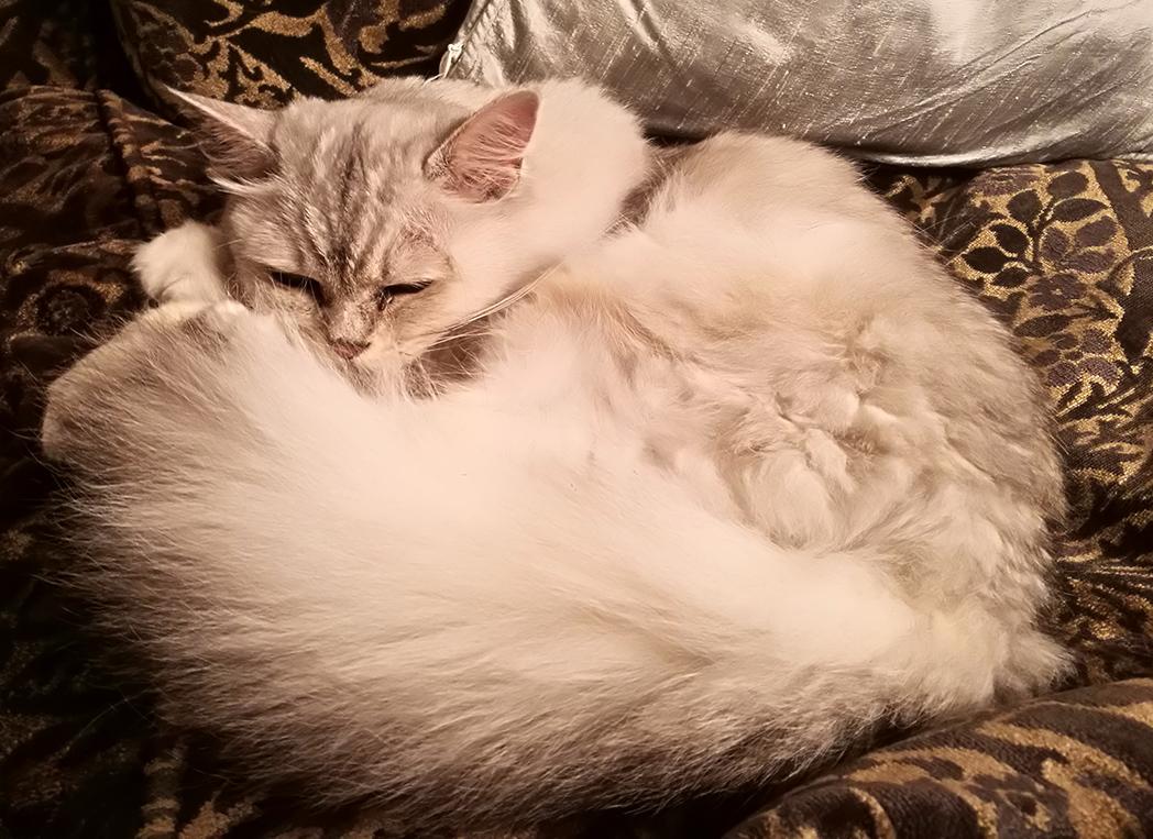 Lena - Tiffanie - Sleeping