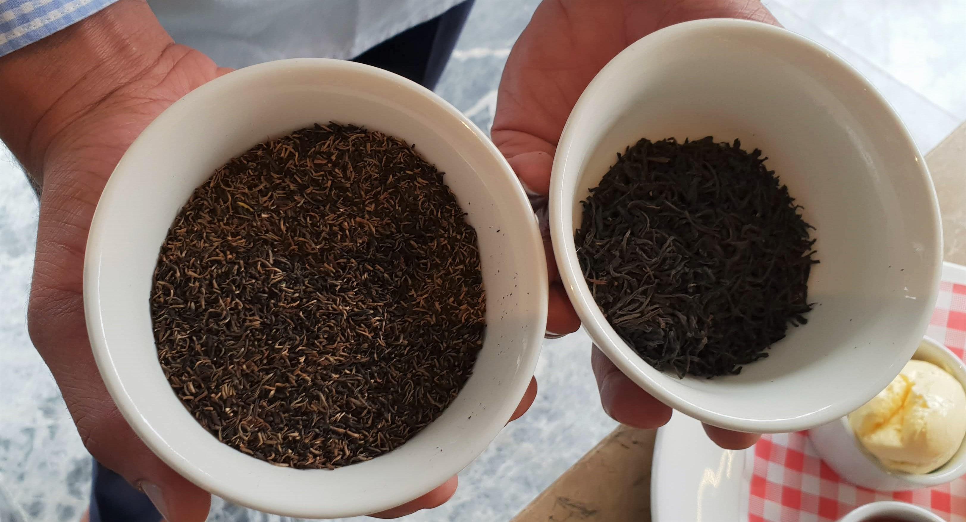 Plate Tea Academy PMD tea-