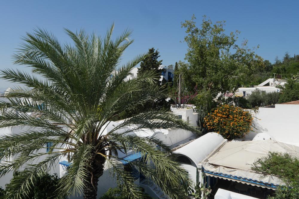 sidi bou said roof and palm - dar el-Annabi