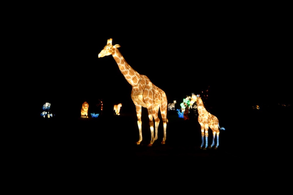 Lightopia London - Giraffes