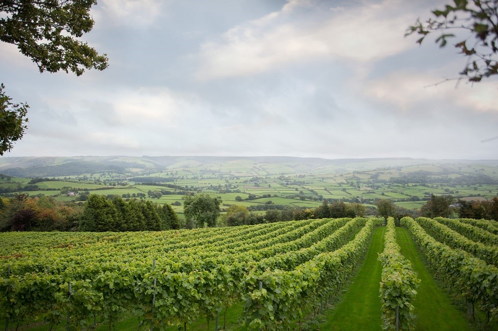 Montgomery Vineyard - view - Mid-Wales