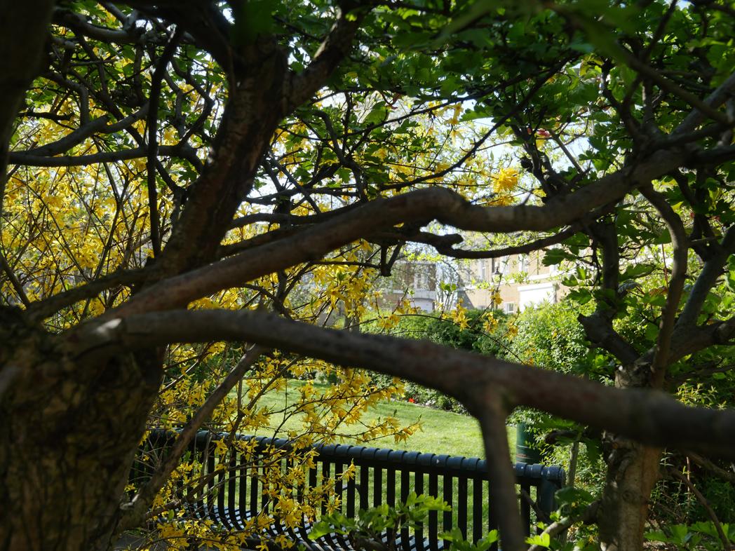 Sutherland Square Walworth - Garden