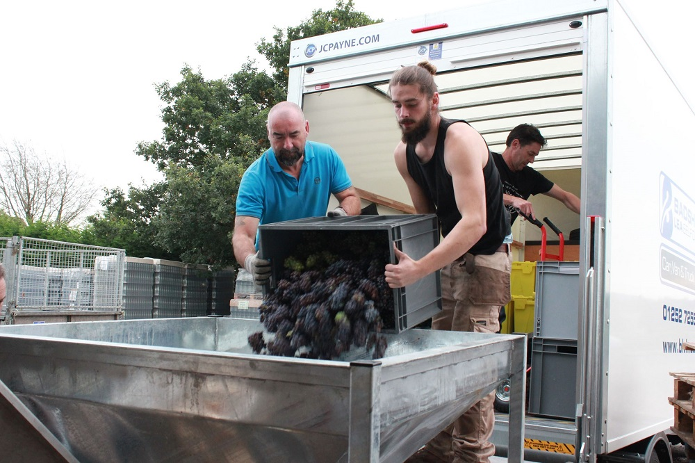 Urban Wine - harvest day