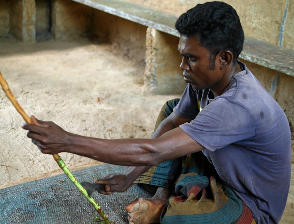 Preparing Cinnamon Sri Lanka