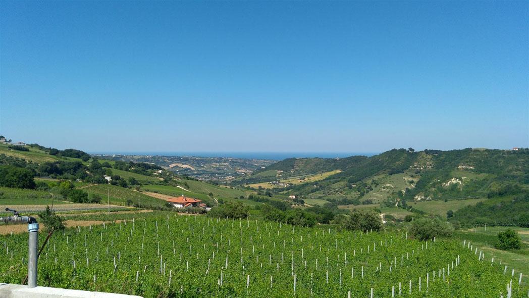 Vineyard Le Marche
