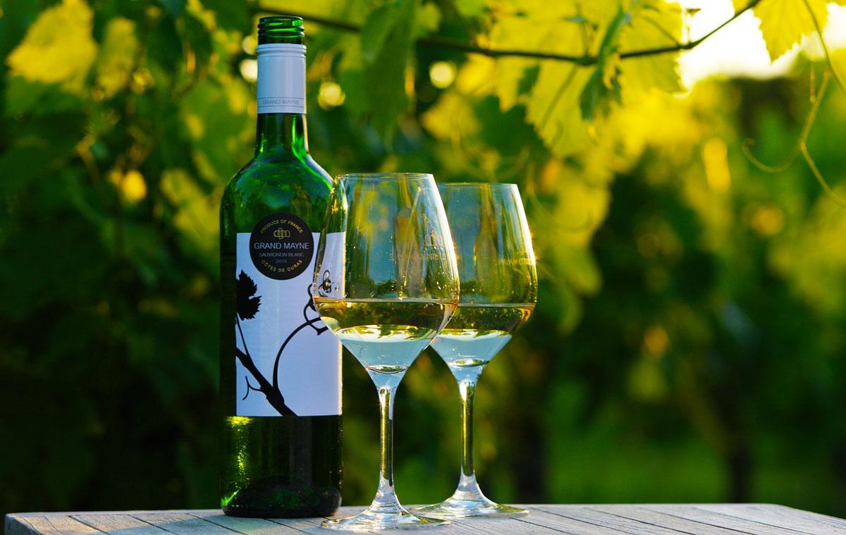Grand Mayne white in vines