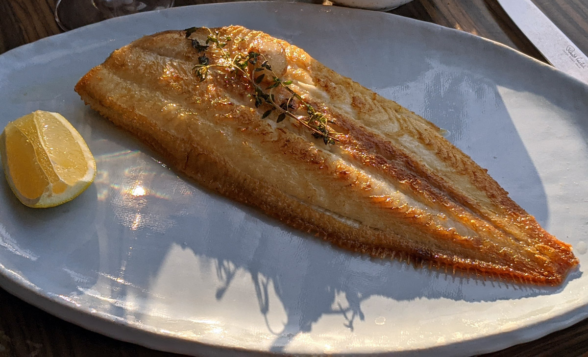 Dover Sole - Oblix