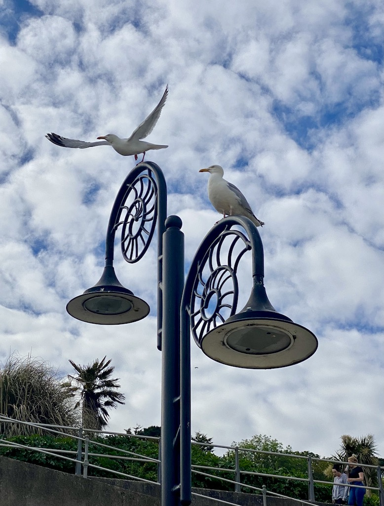 Gullls in Lyme